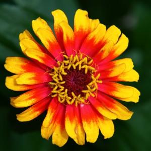 hippie-flower