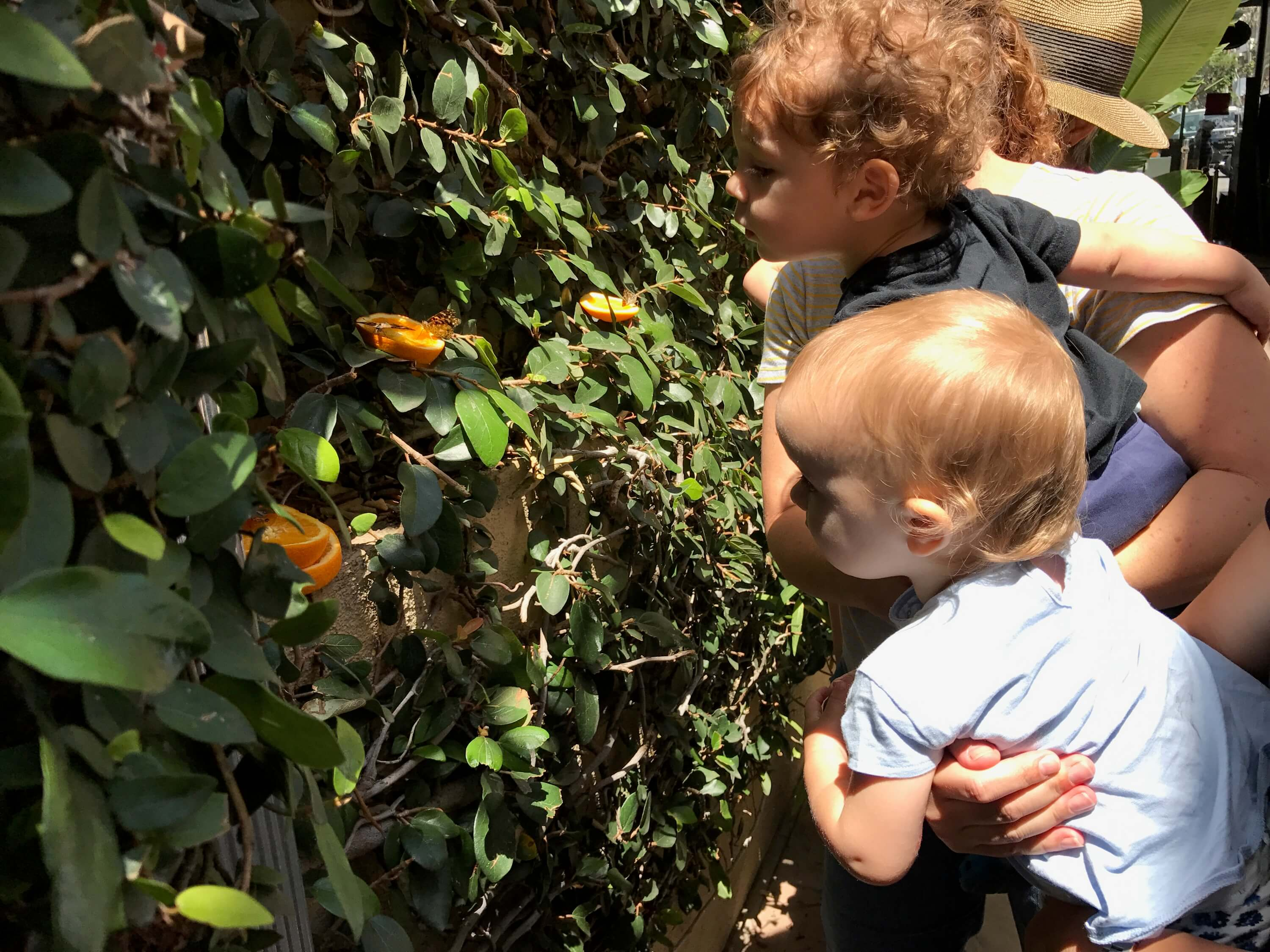 parents and toddlers looking at orange with a buterfly above at early childhood development associates class