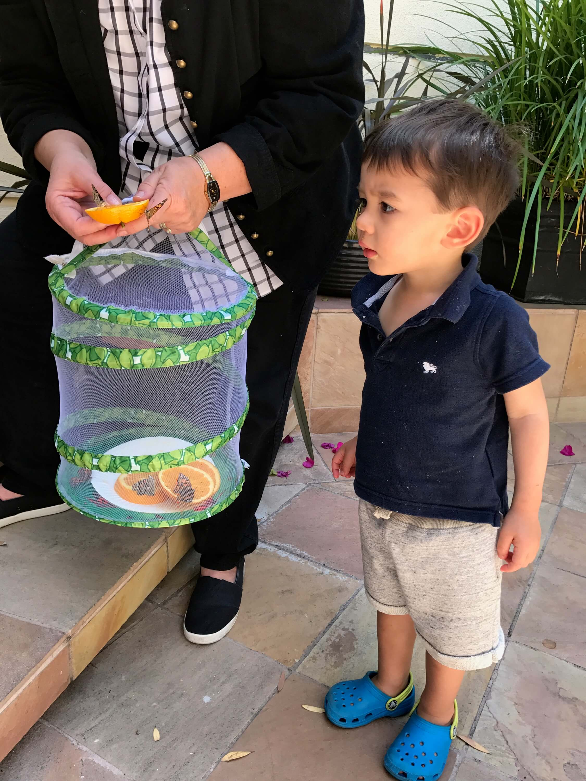 toddler boy looking at butterfly at early childhood development associates class