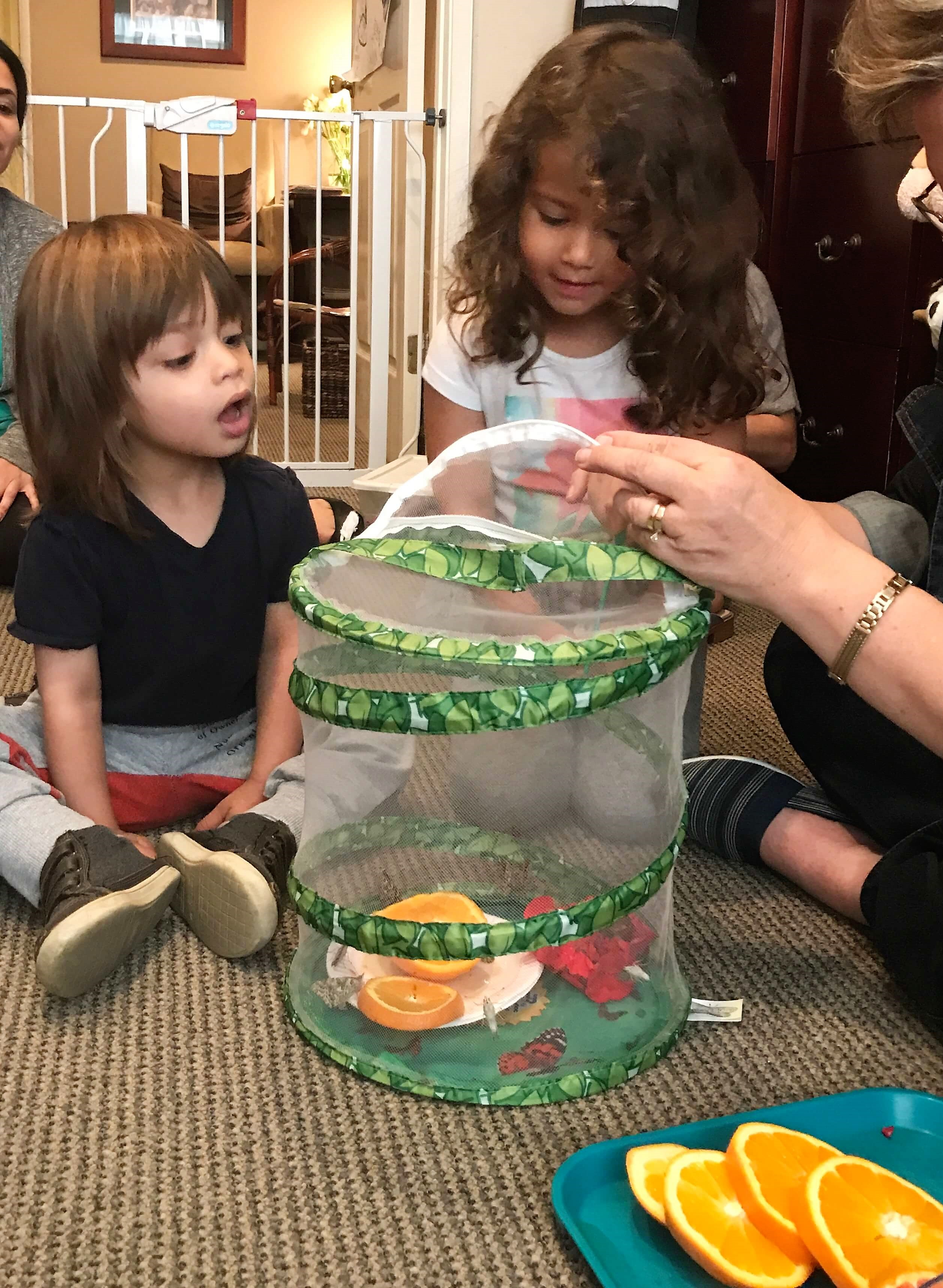 toddlers feeding butterflies that are in a cage with oranges at early childhood development associates class