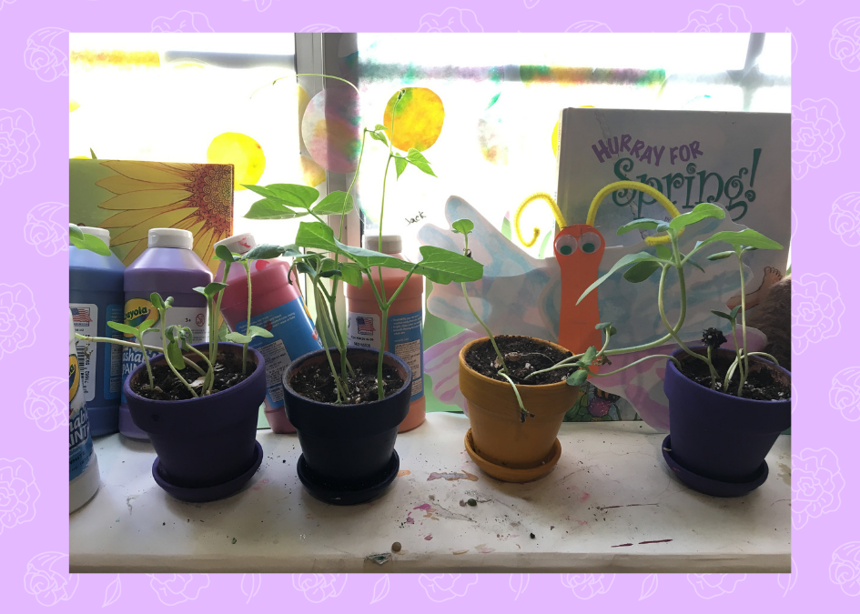Preschool Prep 2019: GROWING – Insects, Seeds, and People!
